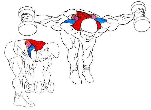 Ejercicios para desarrollar los hombros