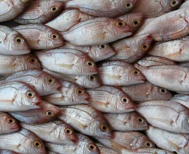 El Pescado: Nutrientes y Salud