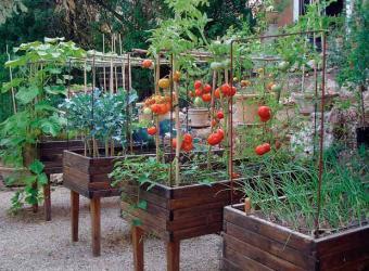 Verduras y hortalizas en tu terraza