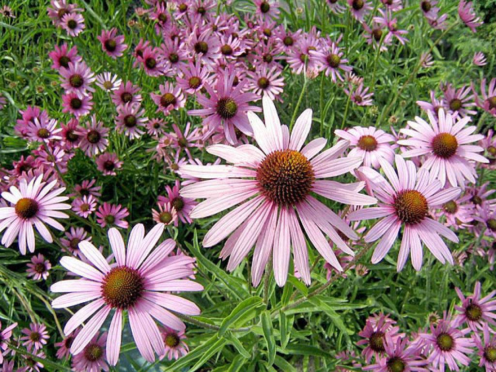Flores de Bach como remedio para el mal humor
