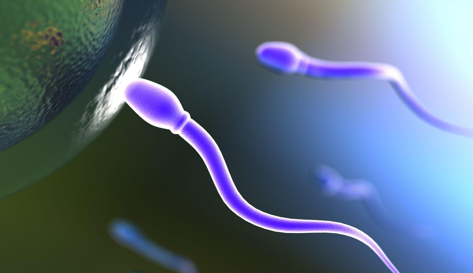 Donación de óvulos, un bien para todas las mujeres