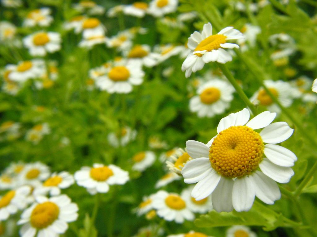 Plantas medicinales, la solución a muchos problemas de salud
