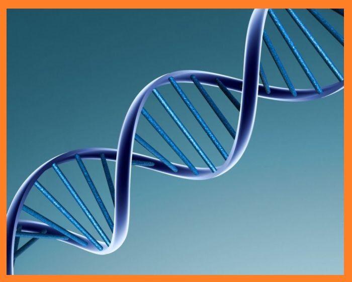 la-predisposicion-genetica-es-un-factor-fundamental-para-padecer-la-enfermedad-de-lupus-jpg-4199512