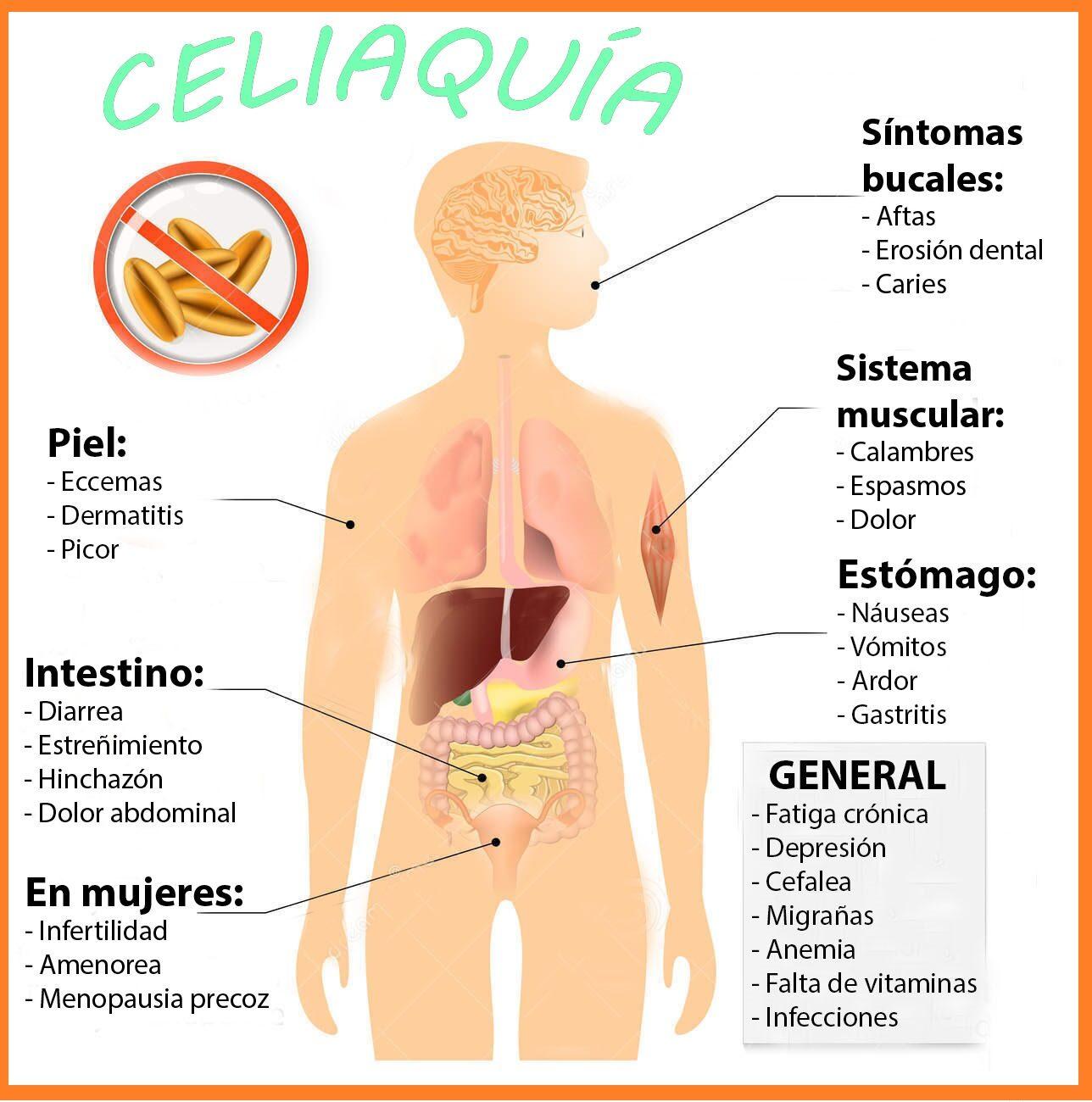 coeliac-disease-celiac-disease-sprue-signs-symptoms-human-silhouette-highlighted-internal-organs-56210159-9783556