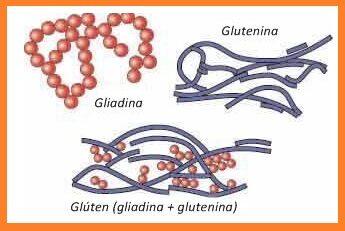 gluten-1-3377134